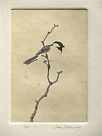 Chickadee - Joel Ostlind