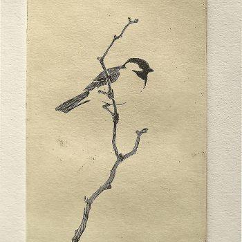 Joel Ostlind - Chickadee