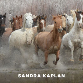 Sandra Lee Kaplan photography