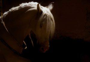 Sandra Lee Kaplan - King's Horse
