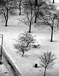 Michael Fain - Chicago Trees B