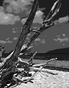 Michael Fain - Ocean Tree A