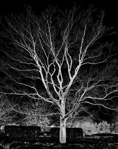 Michael Fain - Tree 25