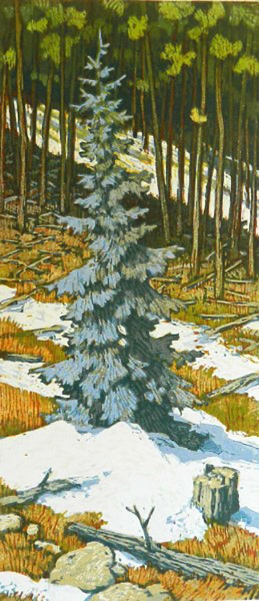 Leon Loughridge - Blue Spruce 14/15 UNF