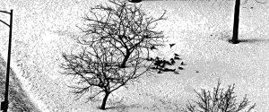 Michael-Fain-Chicago-Trees-B-slide