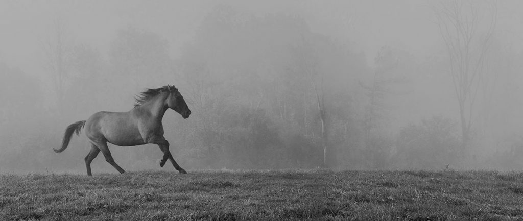 Sandra Lee Kaplan - Horse in Fog