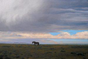Linda Lillegraven - Wild Stallion, Red Desert
