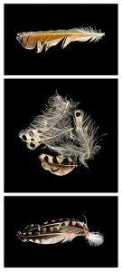 Kathryn Rabinow - Flicker Feather Triptych