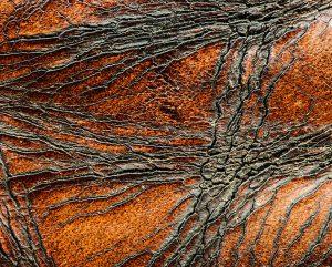 Gayle Waterman - Wild Horses 1/5