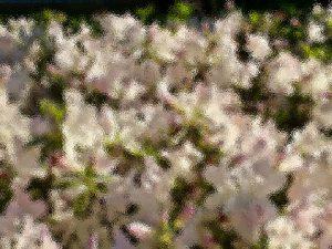 Kathryn  Rabinow  - A Sense of Spring