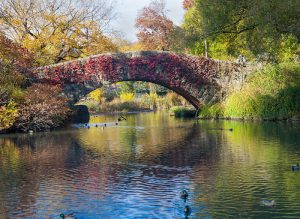 Tom Korologos - Fall Colors of Central Park, N.Y.