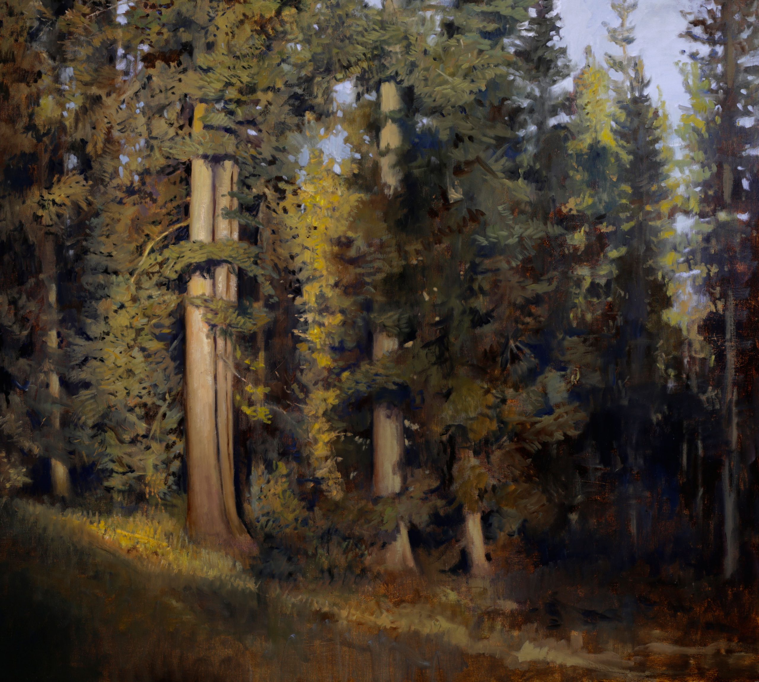 Peter Campbell - Forest Solitude