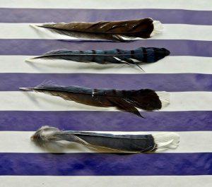 Kathryn  Rabinow  - Four Feathers 1/1