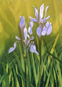 Sherrie York - Iris 2/25