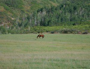 Tom Korologos - Lone Horse, Big Field, UNF