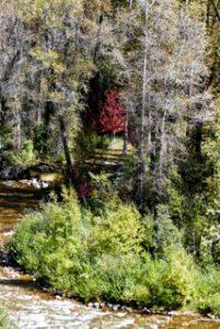 Kathryn  Rabinow  - Red Tree 1/1