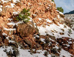 Tom Korologos - Tree in a Rock, Basalt, CO