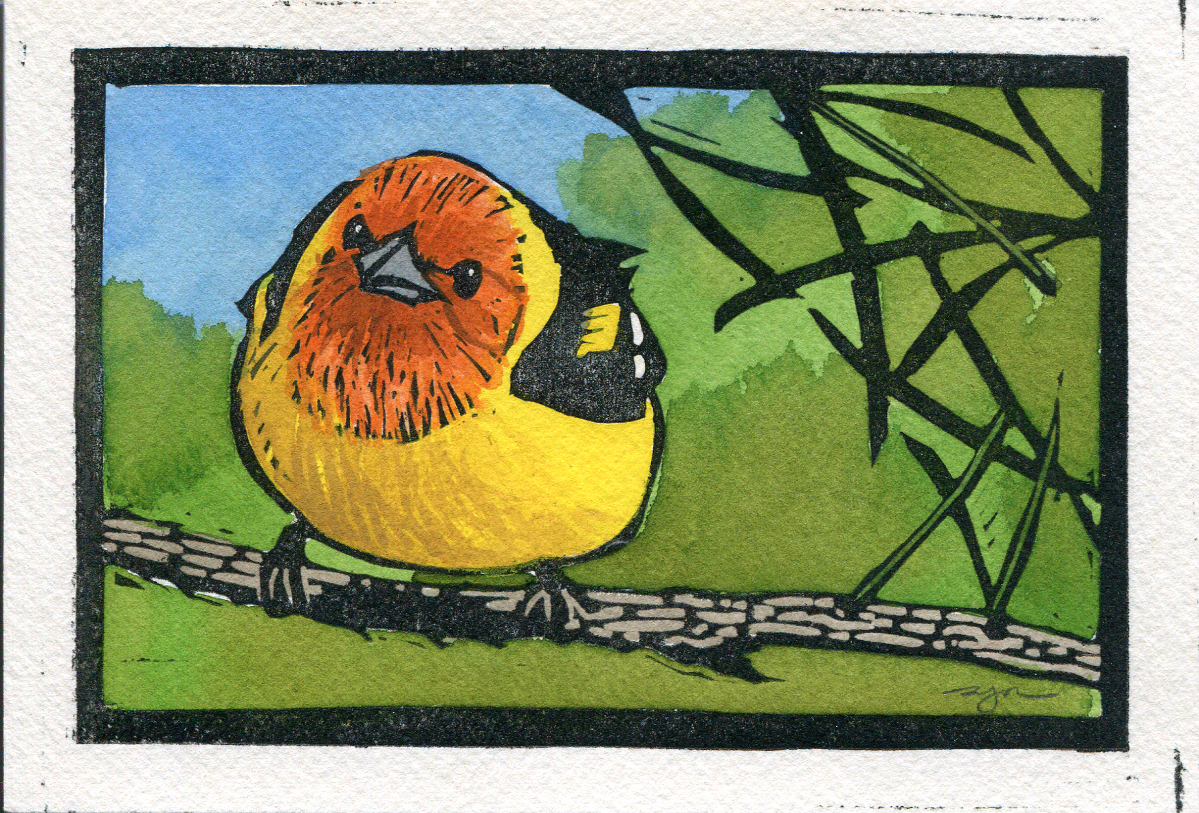 Sherrie York - Western Tanager