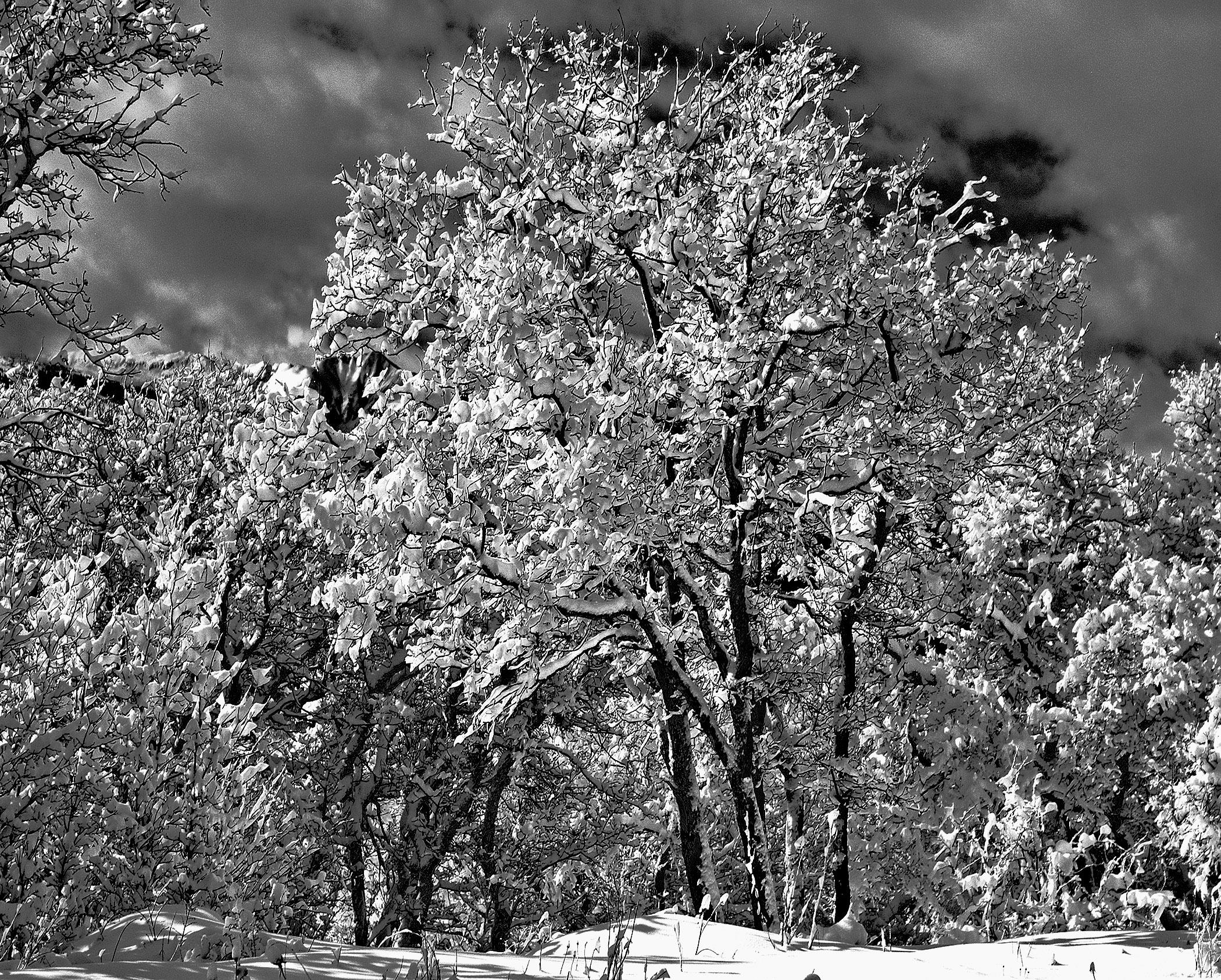 Michael Fain - Winter Trees 15 1/6
