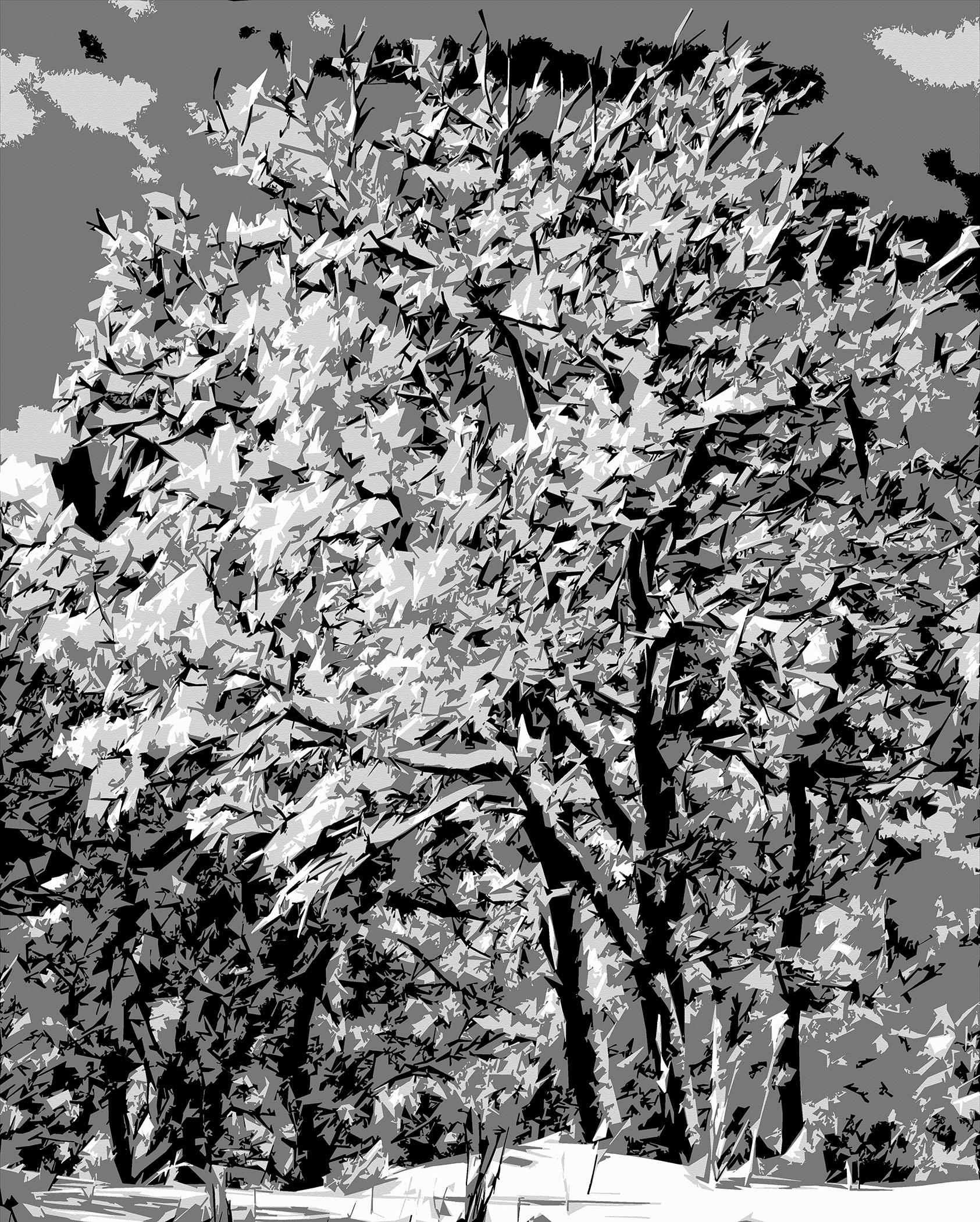 Michael Fain - Winter Trees 16 2/6