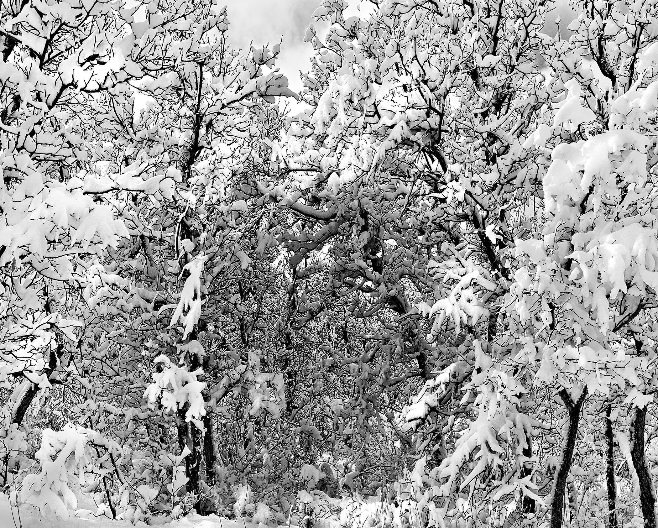 Michael Fain - Winter Trees 17 1/6