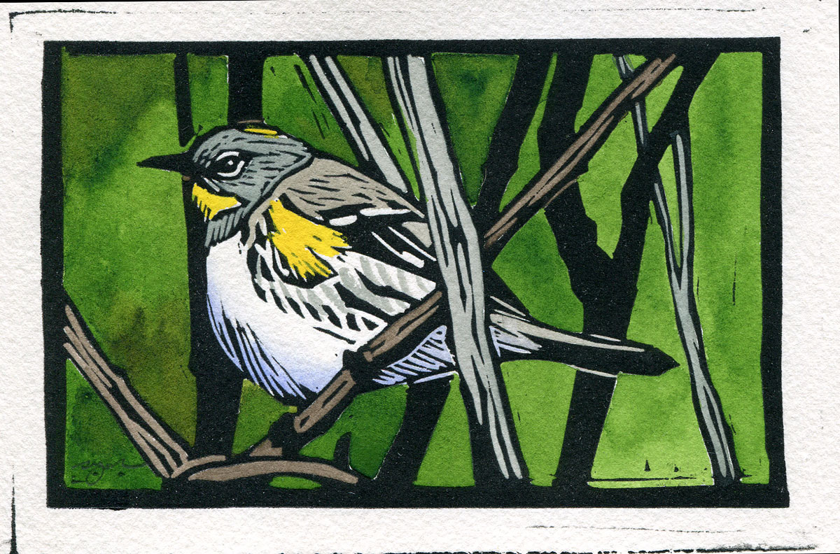 Sherrie York - Yellow-rumped Warbler