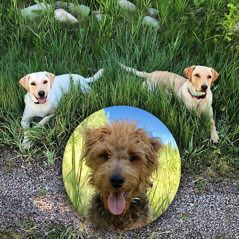 Ann Korologos Gallery dogs
