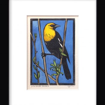 Sherrie York - Yellow-headed Blackbird