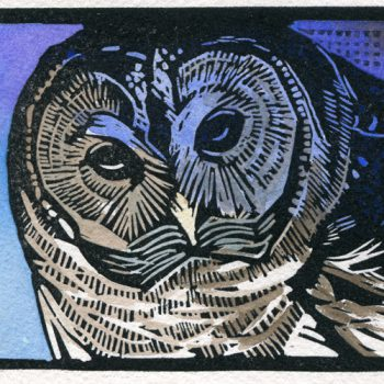 Sherrie York - Barred Owl
