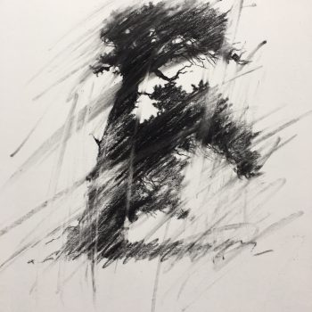 Terry  Gardner - Lone Bristlecone - Study