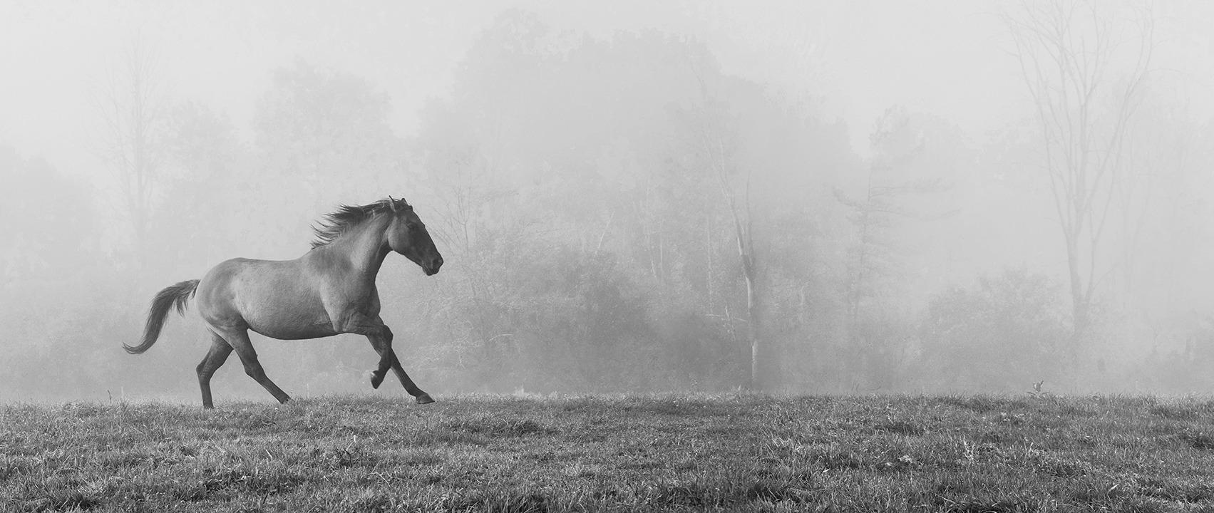 Sandra Kaplan  - Horse in Fog
